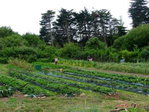 vue d'un terrain pour l'agriculture - mairie - île d'yeu