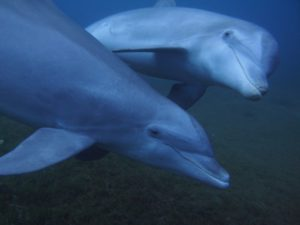 Grand dauphin, Dany Moussa / Mon école - ma baleine